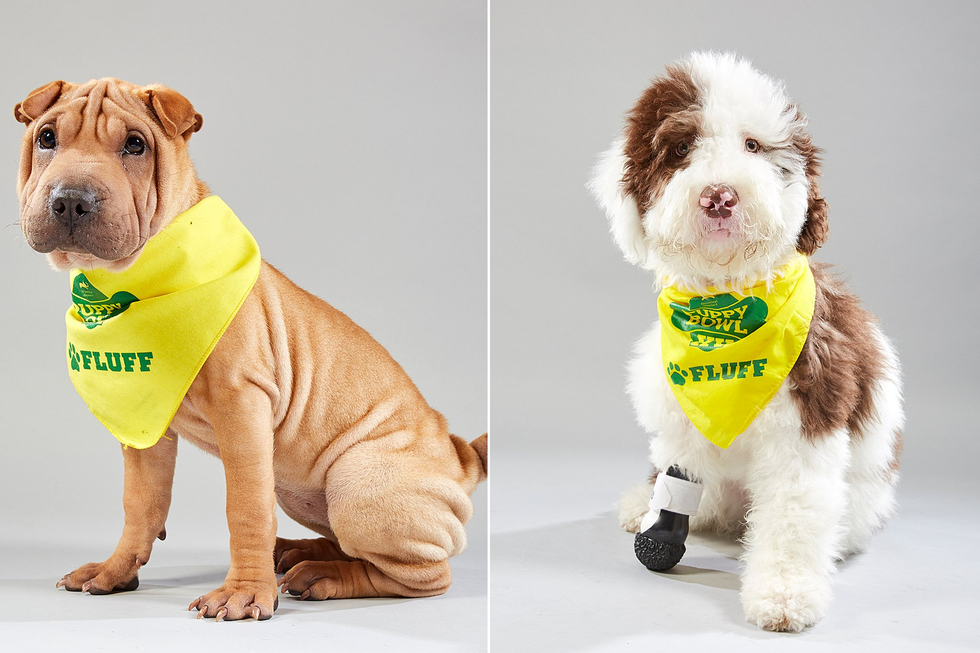 Here Are All the Adoptable, Adorable Baby Dogs Starting in the 2019 Puppy Bowl