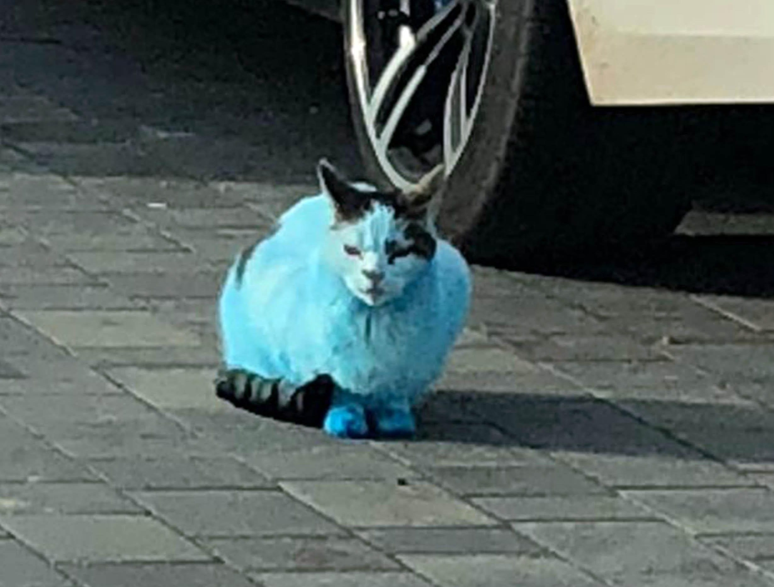 Dozens of pet cats and dogs hit by cloud of blue dye after ink cartridge explodes in fire