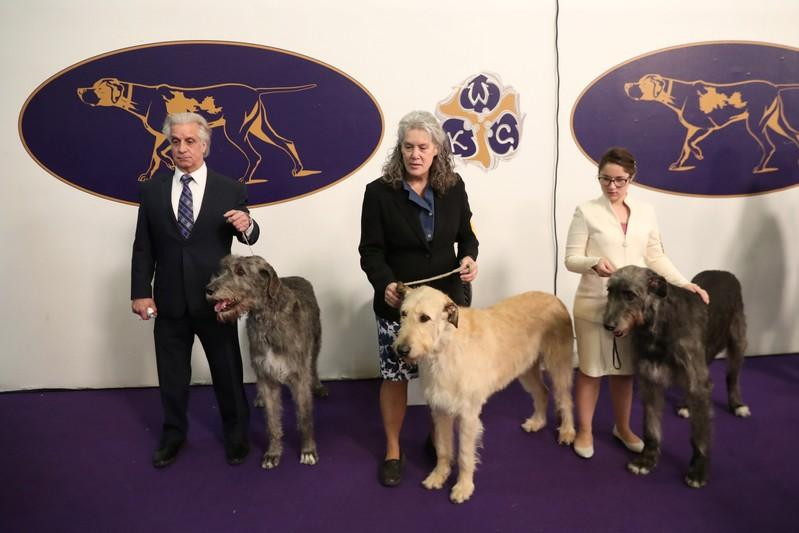 Dachshund, schipperke among breeds to advance to final at Westminster Dog Show
