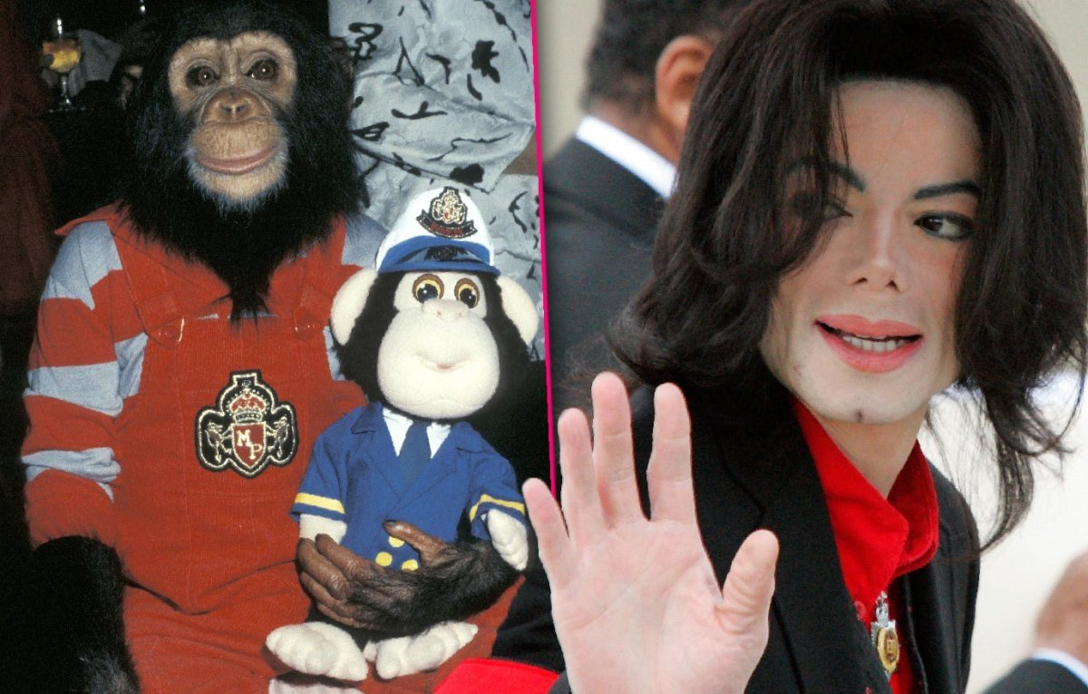 Michael Jackson's Chimp Bubbles Can't Stand Being Reminded Of Star