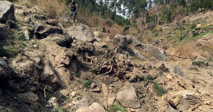 Pakistan accuses India of 'eco-terrorism' for airstrike that hit trees, not militants