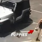 Coachella Woman Caught on Video Throwing Bag of Puppies in Dumpster