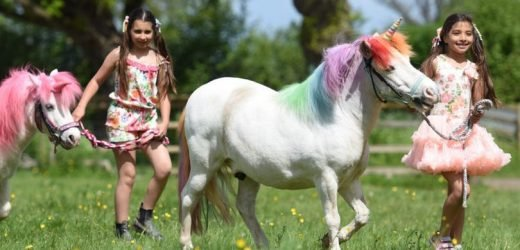 Unicorn Land is coming to the UK where kids can ride and meet unicorns for £37
