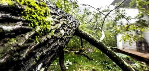8-year-old girl killed after storm causes tree to crash through her Florida home
