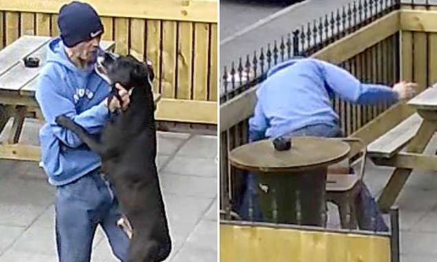 Thug rams his dog head-first into fence before repeatedly punching it
