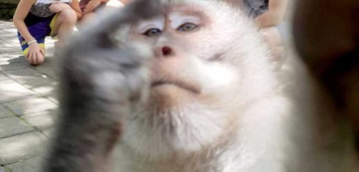 Photobombing monkey gives one-finger salute as he ruins family holiday pic in Bali forest – The Sun