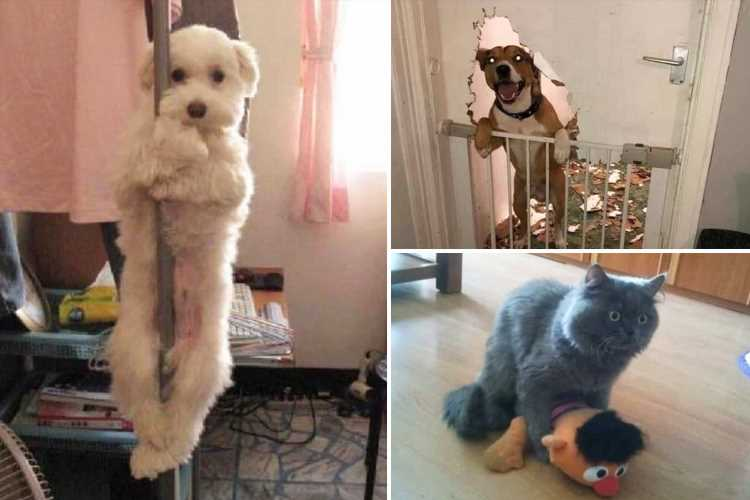 Hilarious snaps catch cats and dogs in the act being very naughty
