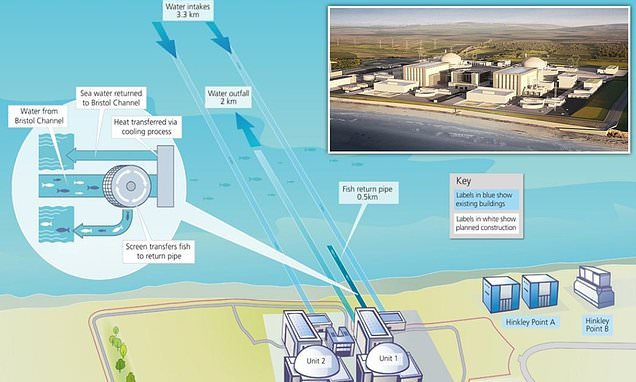 New Hinkley Point nuclear power station 'will kill 250,000 fish a day'