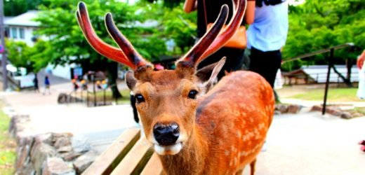Plastic is killing Japan's famous Nara deers