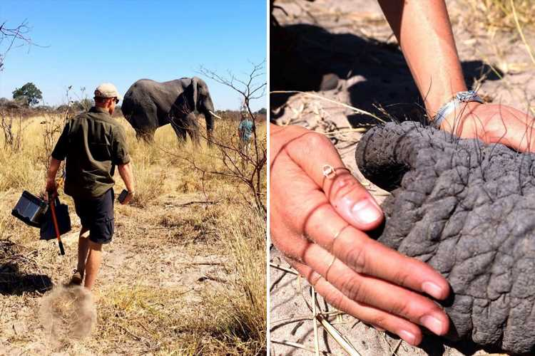 Meghan Markle and Prince Harry share never-before-seen photos of private Africa trip to mark World Elephant Day