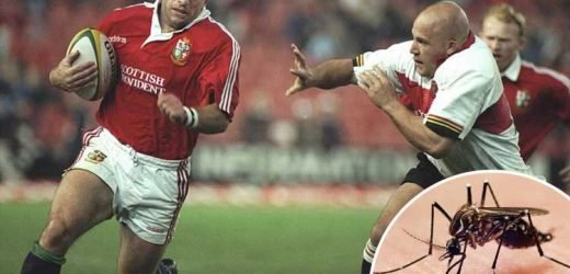 Rugby World Cup fans warned to beware deadly Zika-like brain virus spread by mosquitos in Japan