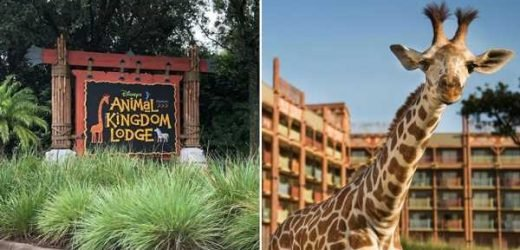 14 Wildly Fascinating Facts About Disney's Animal Kingdom Lodge