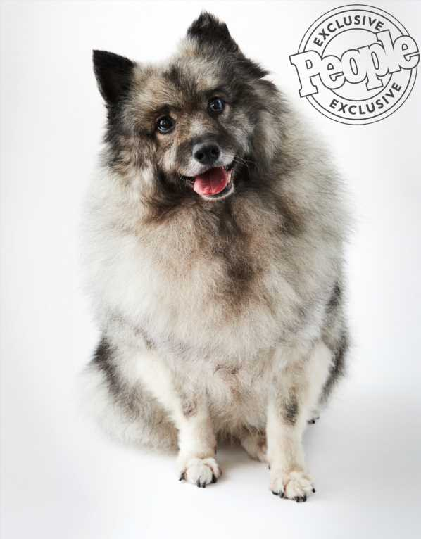Meet Kasey! Puppy Mill Survivor and Winner of the World's Cutest Rescue Dog Contest